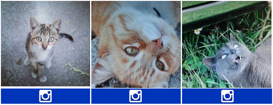gato_instagram3